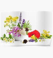 Gartenkräuter Poster