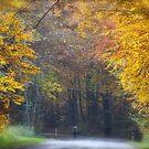 Views 662 .Miracle trees & fields Of Gold. by Sting & Andrzej Goszcz . Featured. . Views (40) thx! by © Andrzej Goszcz,M.D. Ph.D