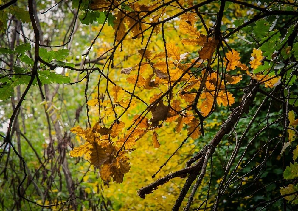 Breath of Autumn  by Andrea Mazzocchetti