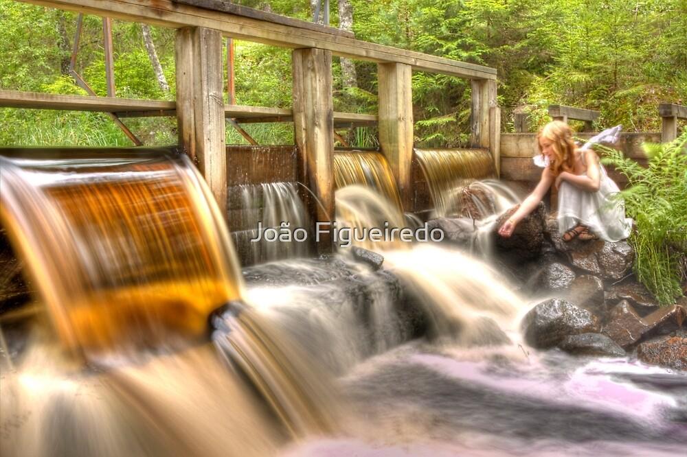 The honey water dam and the guardian – Honung vatten dammen och väktaren by João Figueiredo