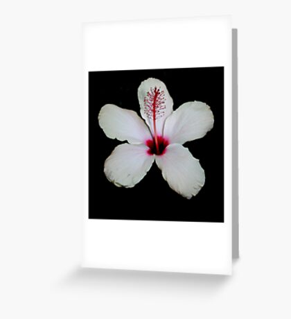 White Hibiscus Isolated on Black Background Greeting Card