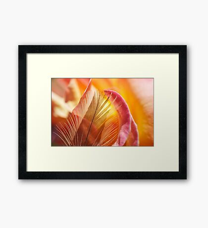Rose Burst Framed Print