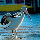 Yes you can Pelican Two by jesskato
