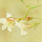 Just Jasmine by Lissywitch