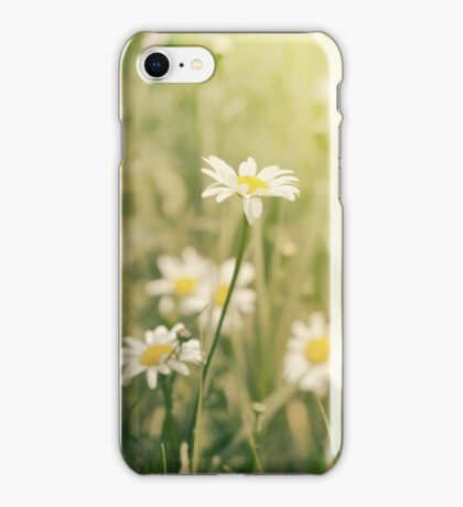 Daisy Wild iphone iPhone Case/Skin