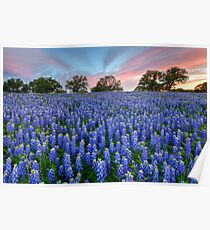 Bluebonnets of the Texas HIll Country 2 Poster