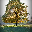 Tree Aglow by mikebov