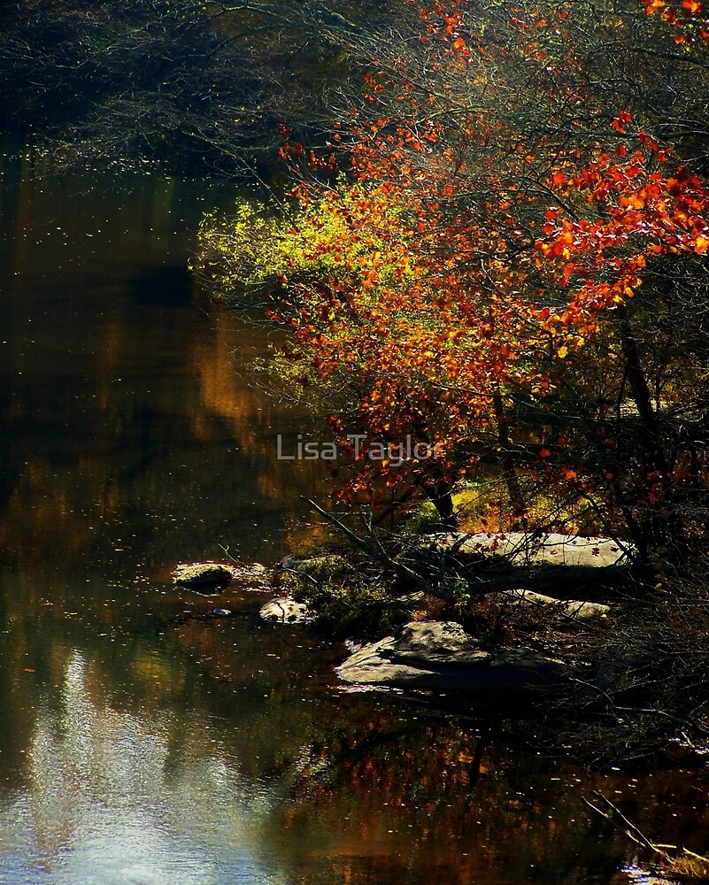 River Reflection by Lisa Taylor
