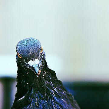 Pigeon by johandahlberg