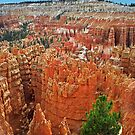 The Hoodoos of Bryce Canyon by Peter Hammer