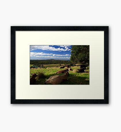 The Hills Of Byron Bay Framed Print
