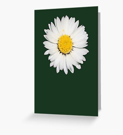 Closeup of a Beautiful Yellow and White Daisy flower Isolated Greeting Card