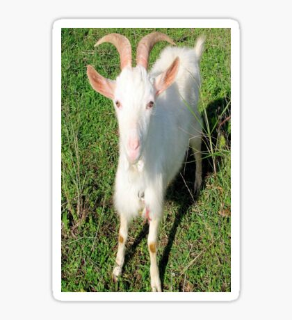 Billy The Kid Goat Sticker
