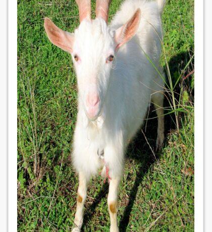 Billy 'The Goat' Sticker
