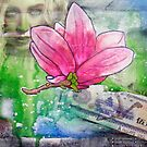 Magnolia Money by Alexandra Felgate