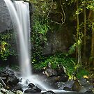 Curtis falls by traveller