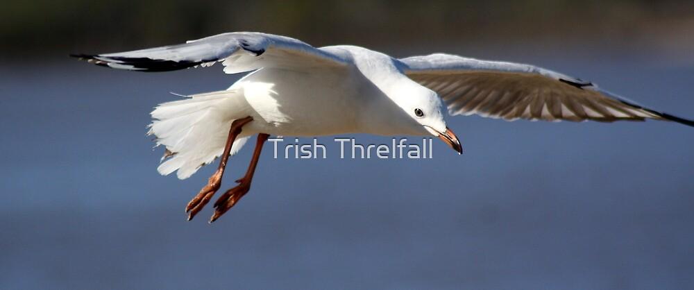 landing gear down by Trish Threlfall