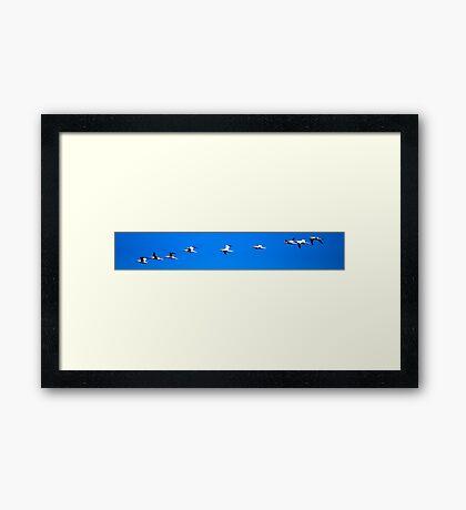GANNETS 2 Framed Print