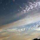 Hang glider by homesick