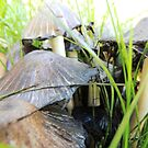 Fungi by Coleen Gudbranson