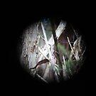Peep hole by Jackson  McCarthy