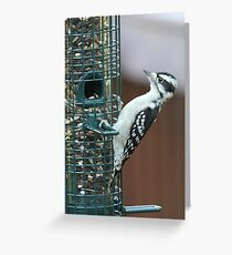 Downy Woodpecker at the Birdfeeder Greeting Card
