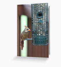Cardinal at the Birdfeeder Greeting Card