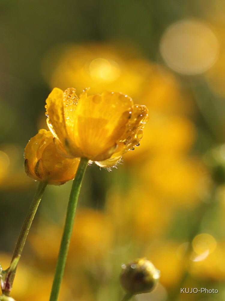 A little Sunshine by KUJO-Photo
