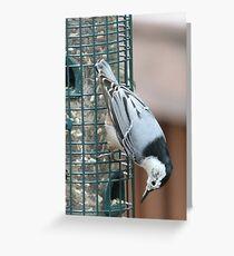 Nuthatch at the Birdfeeder Greeting Card