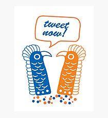 Tweet Bird  Photographic Print