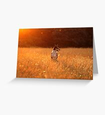 Golden Lara Greeting Card