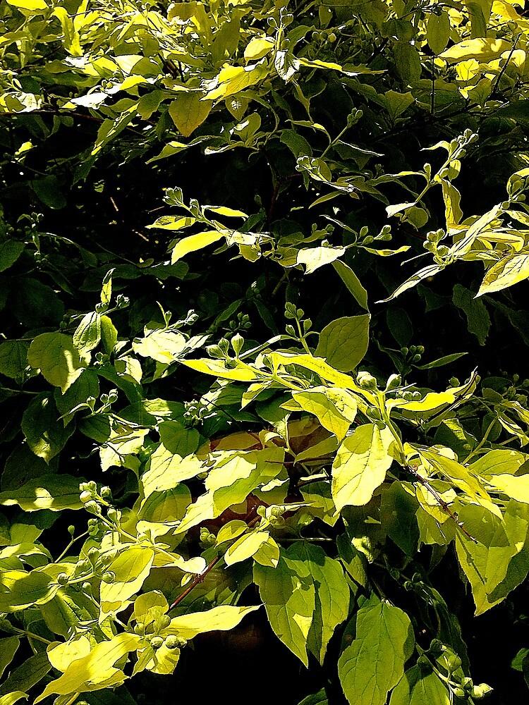 Leaves by robsteadman