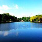 The Lake, University Park, Nottingham by Robert Steadman