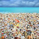 Shelling Paradise by Ticker
