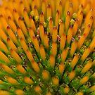 Center of a flower! by vasu