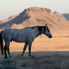 The Last Few Minutes Of Morning Shade /  West Desert Mustang by Robbie Knight