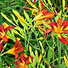 Vibrant Day Lilies by Jane Neill-Hancock