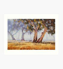 Kangaroo Grazing Art Print