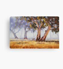 Kangaroo Grazing Canvas Print