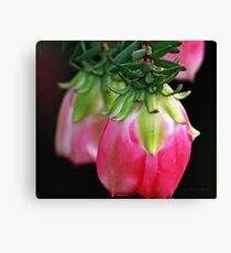 Drooping Red Canvas Print