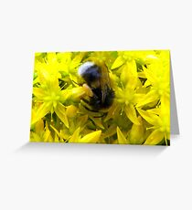Life is a Feast, Honey! Greeting Card