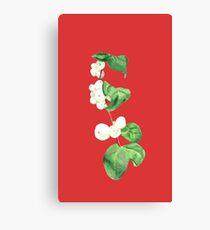 Snowberries Canvas Print