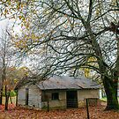A shed in a cold autumn morning by autumnleaf