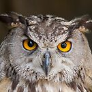Owl by Patrick Sharp