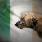 Irish by Carol Bleasdale