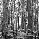 Oak and Caladium. Shingle Creek. by chris kusik