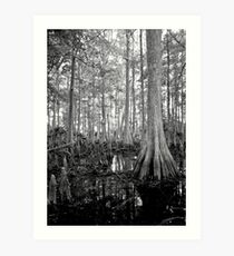 Cypress Swamp. Econlockhatchee River. Art Print