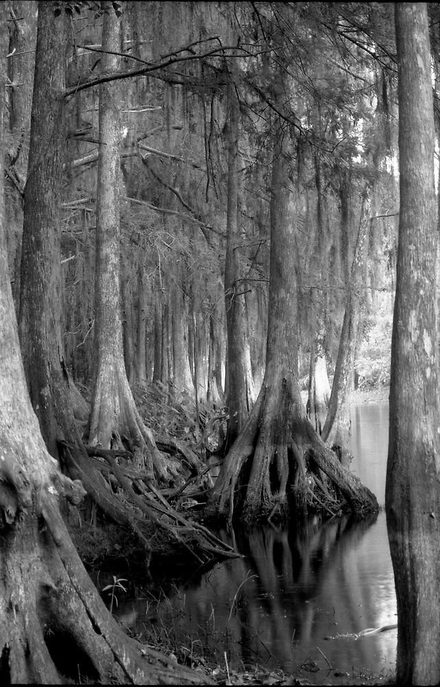 Shoreline. Shingle Creek. by chris kusik