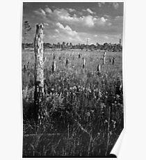 Pine Beetle Cemetery #2. Lake Lizzie Preserve. Poster