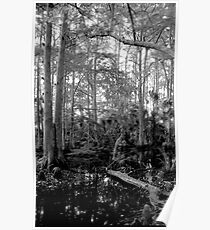 Cypress Swamp #2. Green Swamp W.M.A. Poster